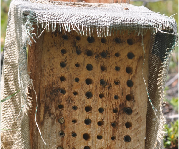 How to Make Bee Houses