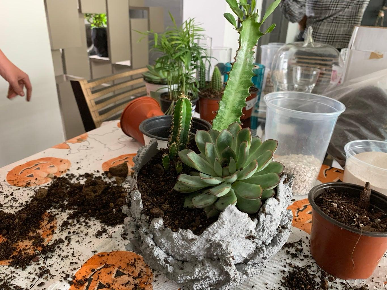Cement Decor Planters