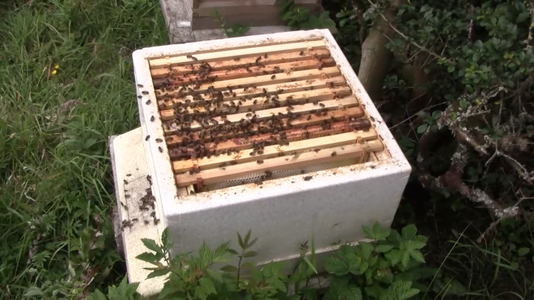 Queen Rearing Colony