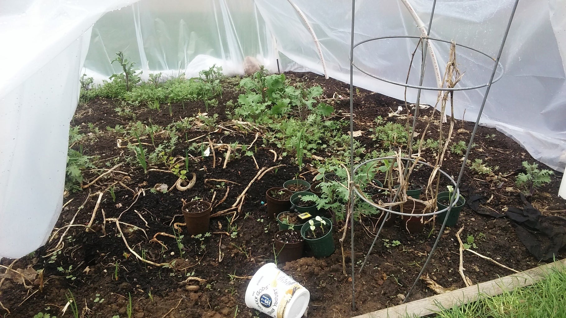 April 24th, Inside the Hoop House