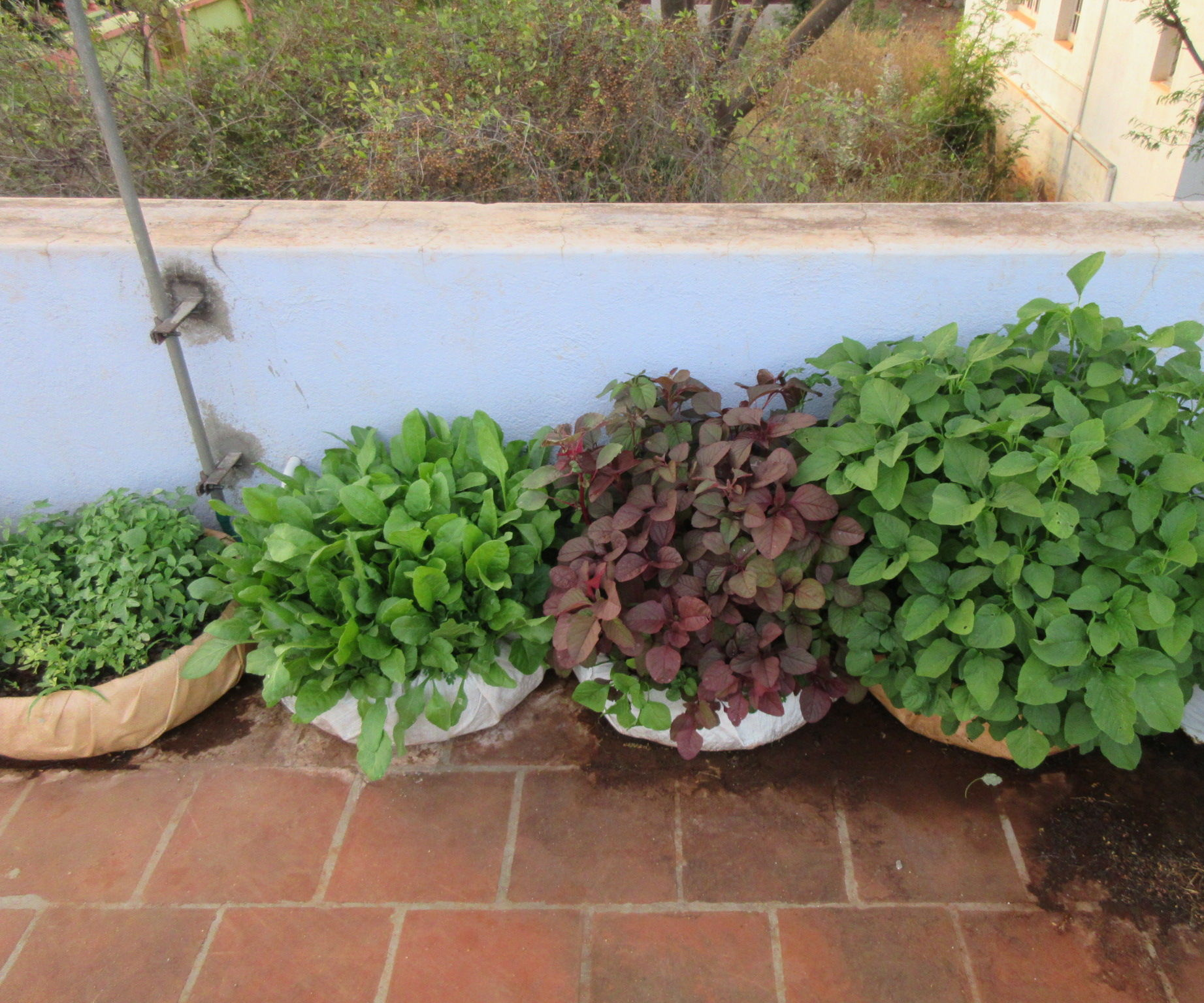 Use Old Tyres to Grow Leafy Vegetables