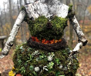 常绿的生活木若虫