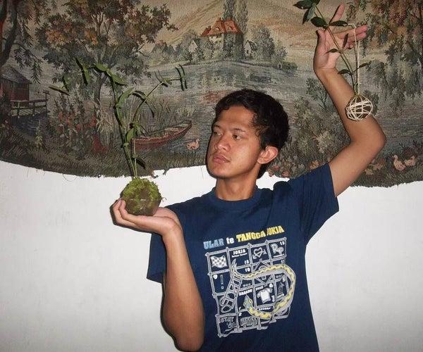 KOKEDAMA: a Unique Way to Grow a Plant