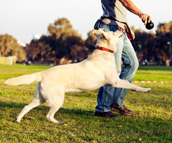 Automatic Ball-thrower for Dogs