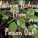 Relieve Itching From Poison Oak