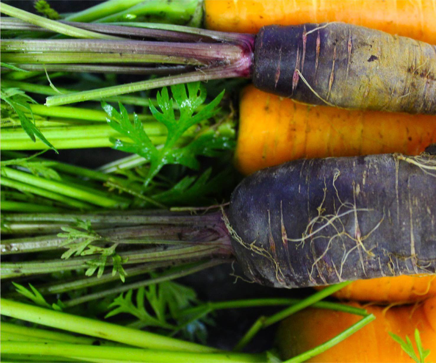 Tout Est Bon Dans La Carotte (Everything's Good in the Carrot)