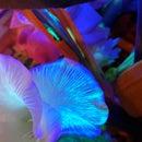 Glowing Pandora Flowers