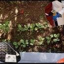 ESP8266 - Garden Irrigation With Timer and Remote Control Via Internet / ESP8266