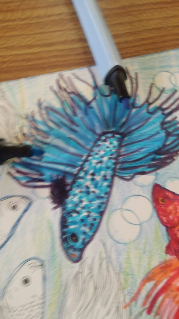3rd Fish