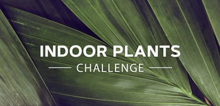 Indoor Plants Challenge