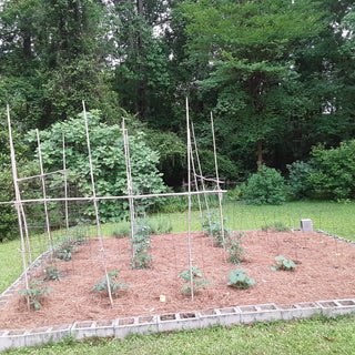 How to Make a Raised Garden Bed With Tomatoes
