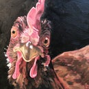 Create an Oil Painting of a Chicken