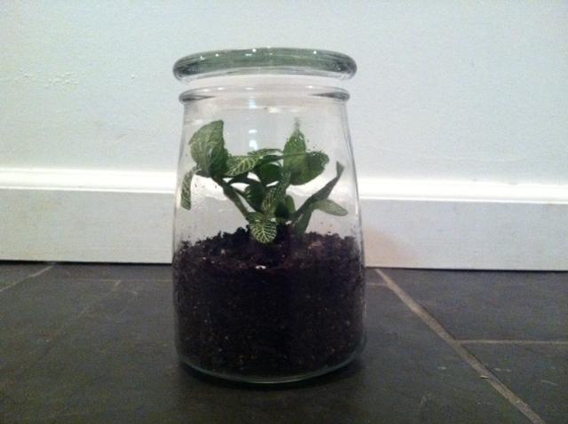 """""""How to make a terrarium"""" by Four Ferns Terrariums"""
