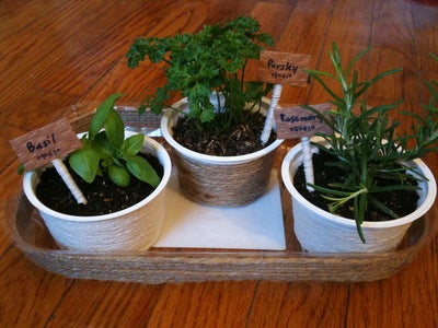 Make a Plate for Your Herbs