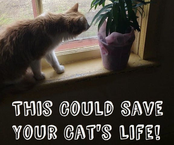 CURE Lily Poisoning in Cats (at Home!)
