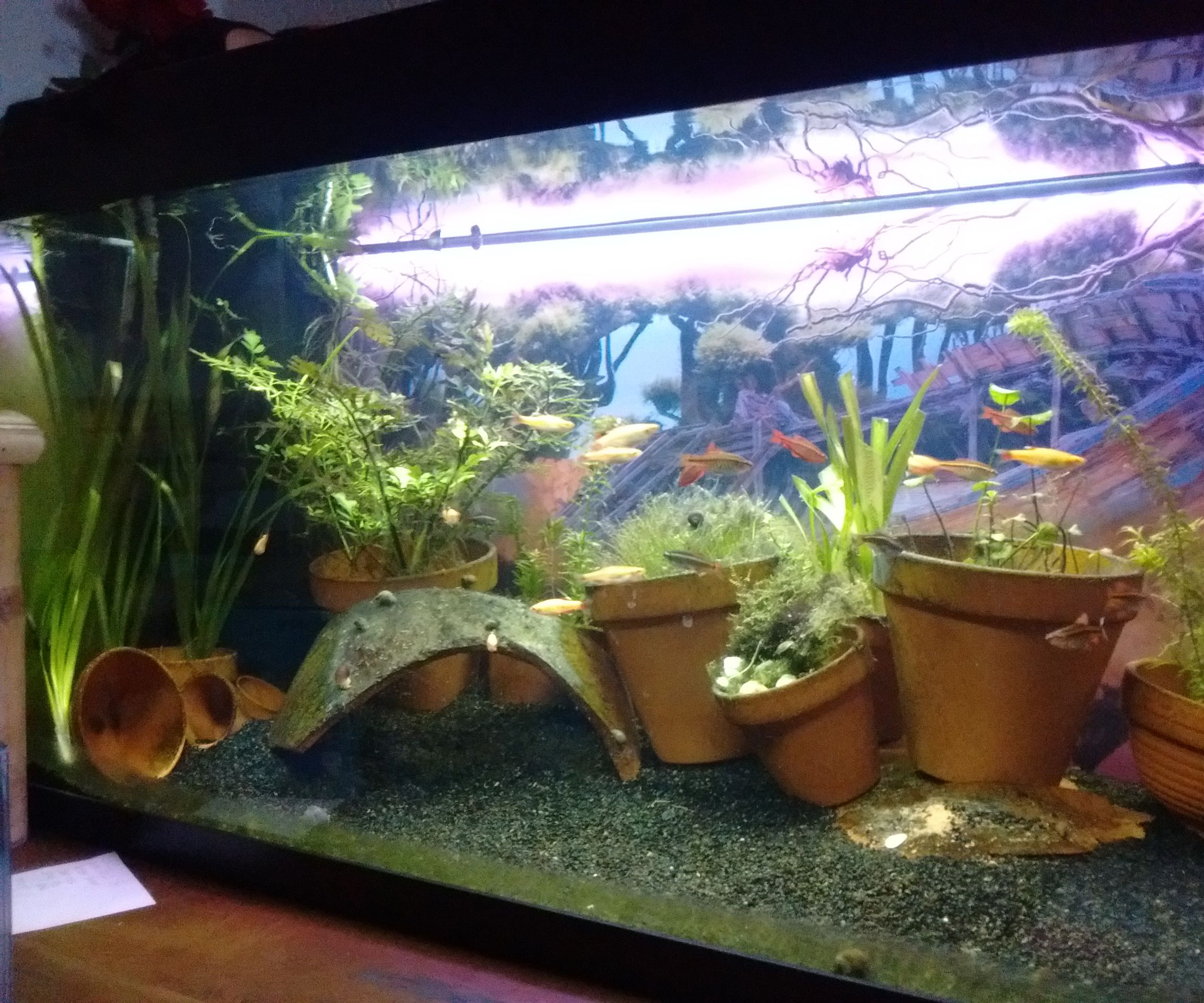Aquarium Diorama With Ledstrip