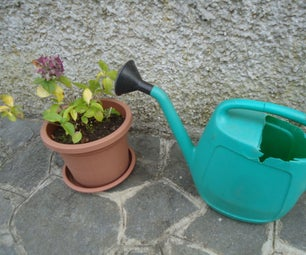 An Old Precious Watering Can