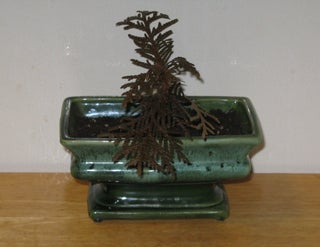Starting A Bonsai From Seed 6 Steps With Pictures Instructables