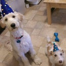Life's a Party Dog Hats