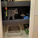 A Cat Chalet; Why Not?