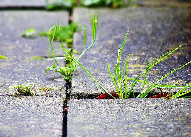Biodegradable and safer alternative for commercial herbicide