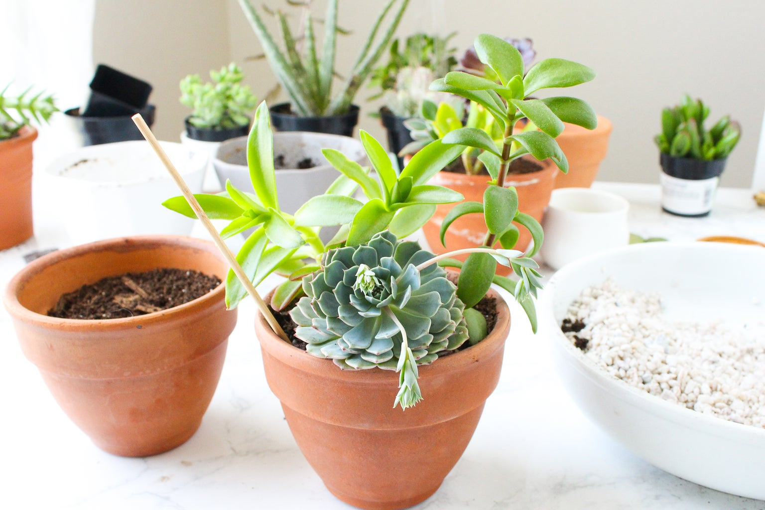 How to Remove Plants From a Ceramic or Terra Cotta Pot