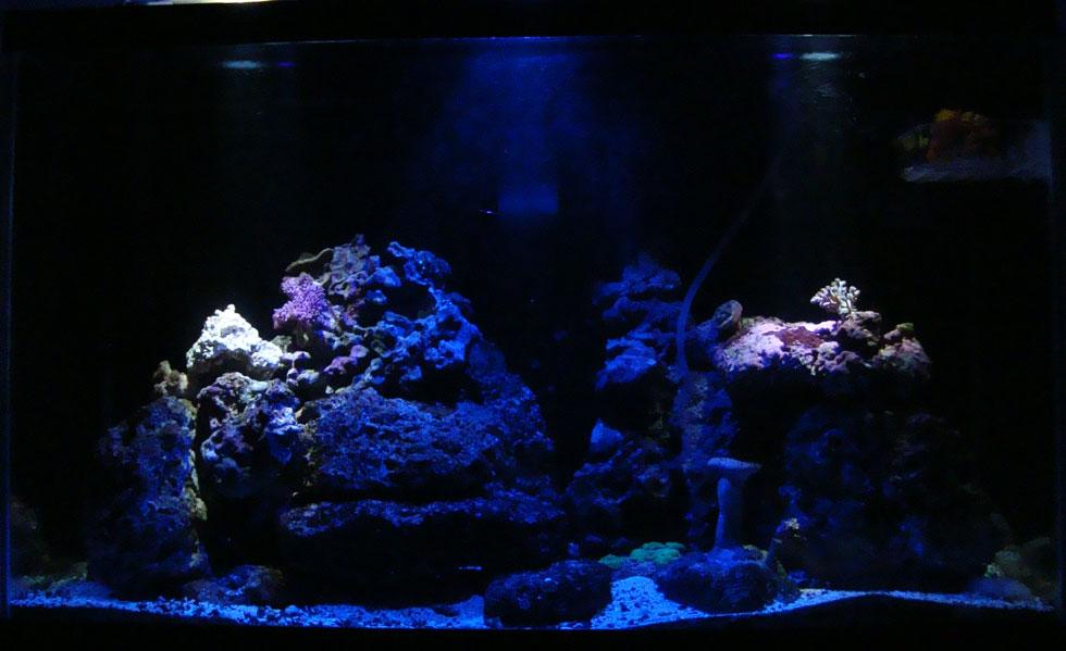 Aquarium Moonlight