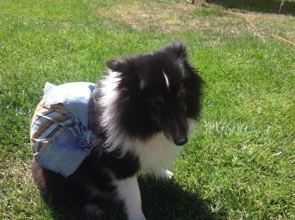 Dog Hiking Backpack