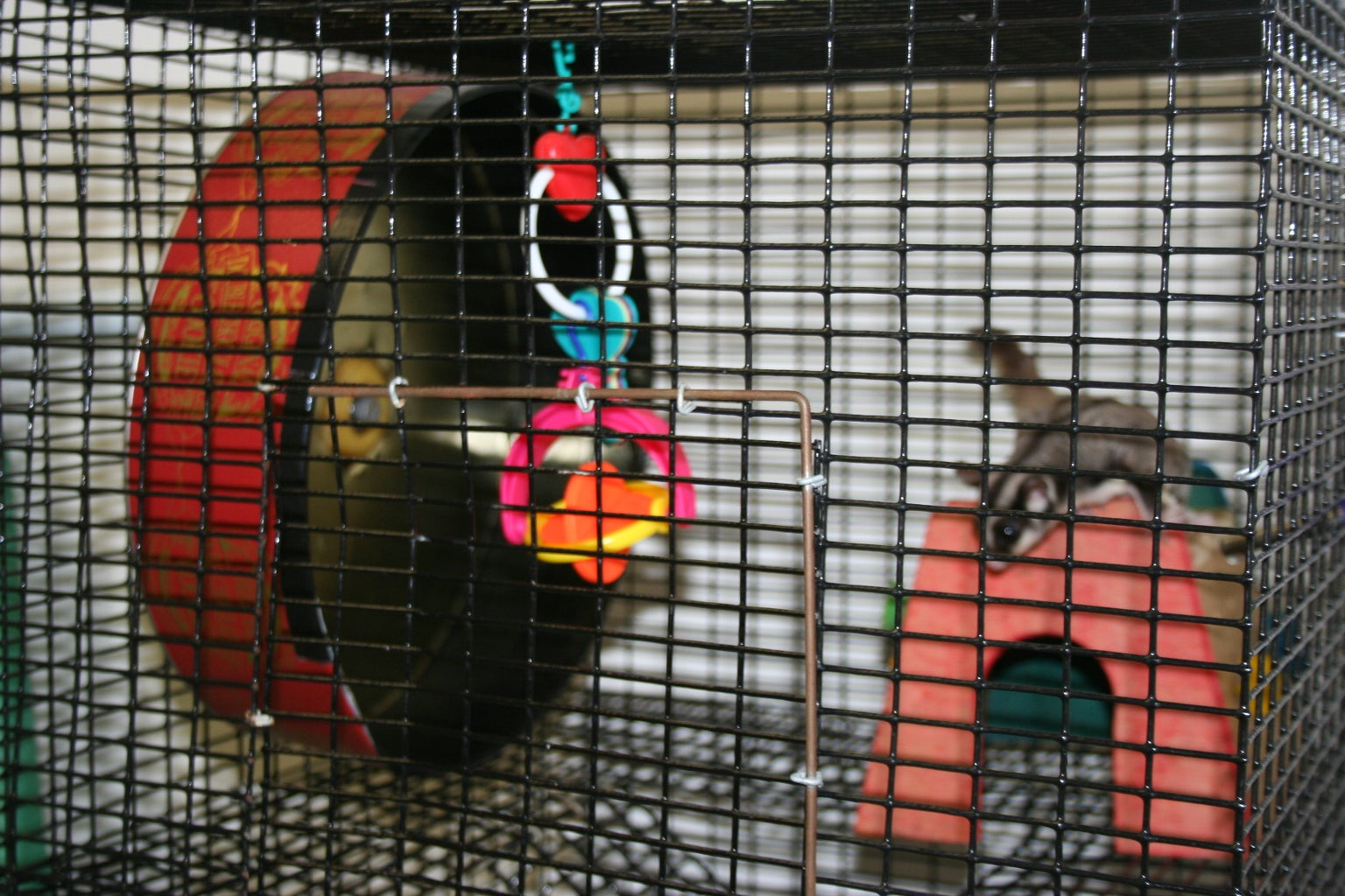 How to Make a Pet Exercise Wheel