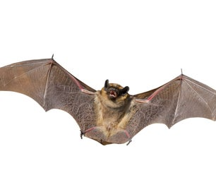Bats Stay Free and They Will Eat Your Bugs!