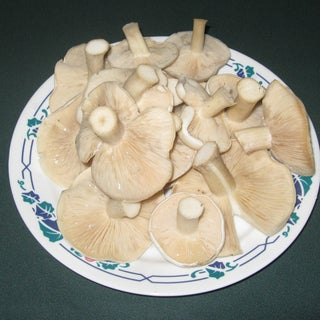 Chanterelles: the Most Delicious Edible Mushroom