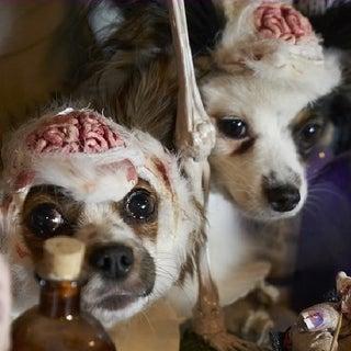 3) Closeup of dog brains.jpg