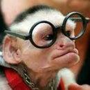 Mr.Monkey16