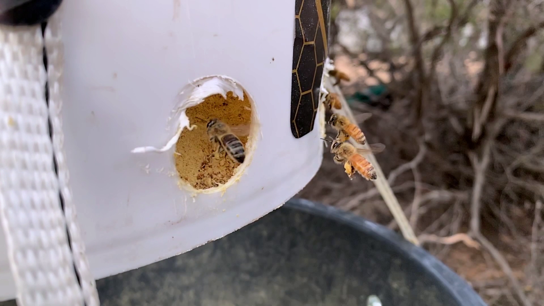 How to Make a Pollen Feeder for Beekeeping