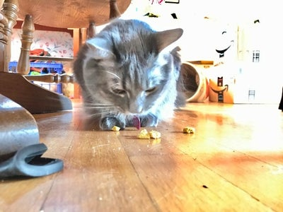 Feline Feasting Time!