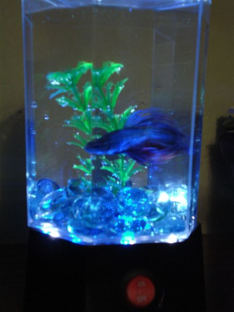 Fish Tank LED Bonanza!