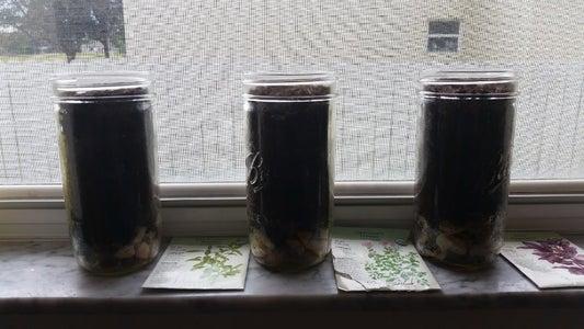 DIY Windowsill Mason Jar Herb Garden