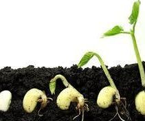 Germinate Your Own Seeds in These 10 Simple Steps