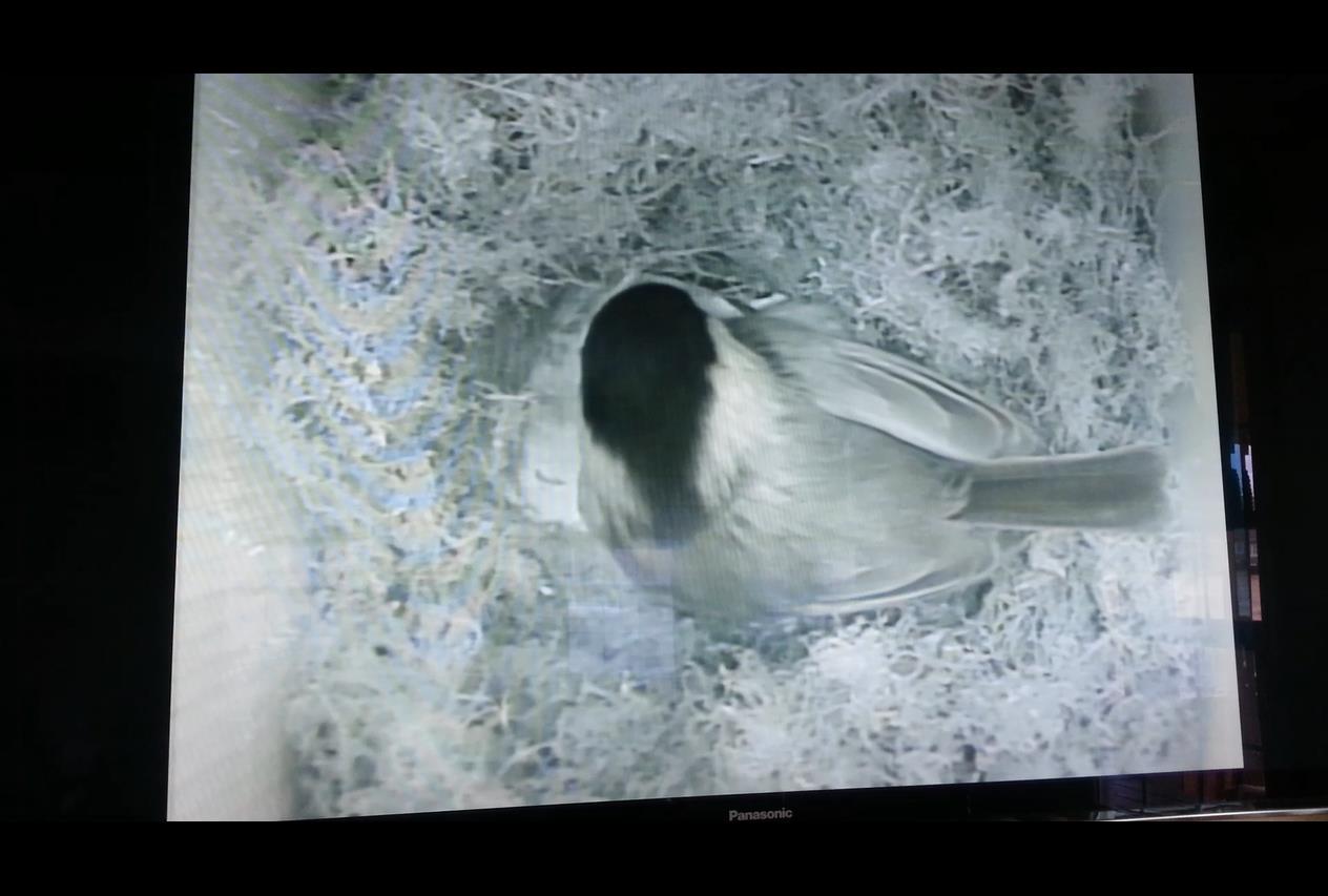 Installing an Infrared Spy Camera inside a Birdhouse