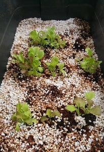 Place Your Wicking Bed in a Sunny Spot