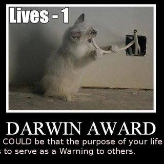 darwin-award catChoice.jpg