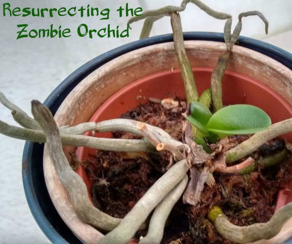 Resurrecting the Zombie Orchid: It's Not Dead Yet!