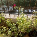 Scheduled Watering System