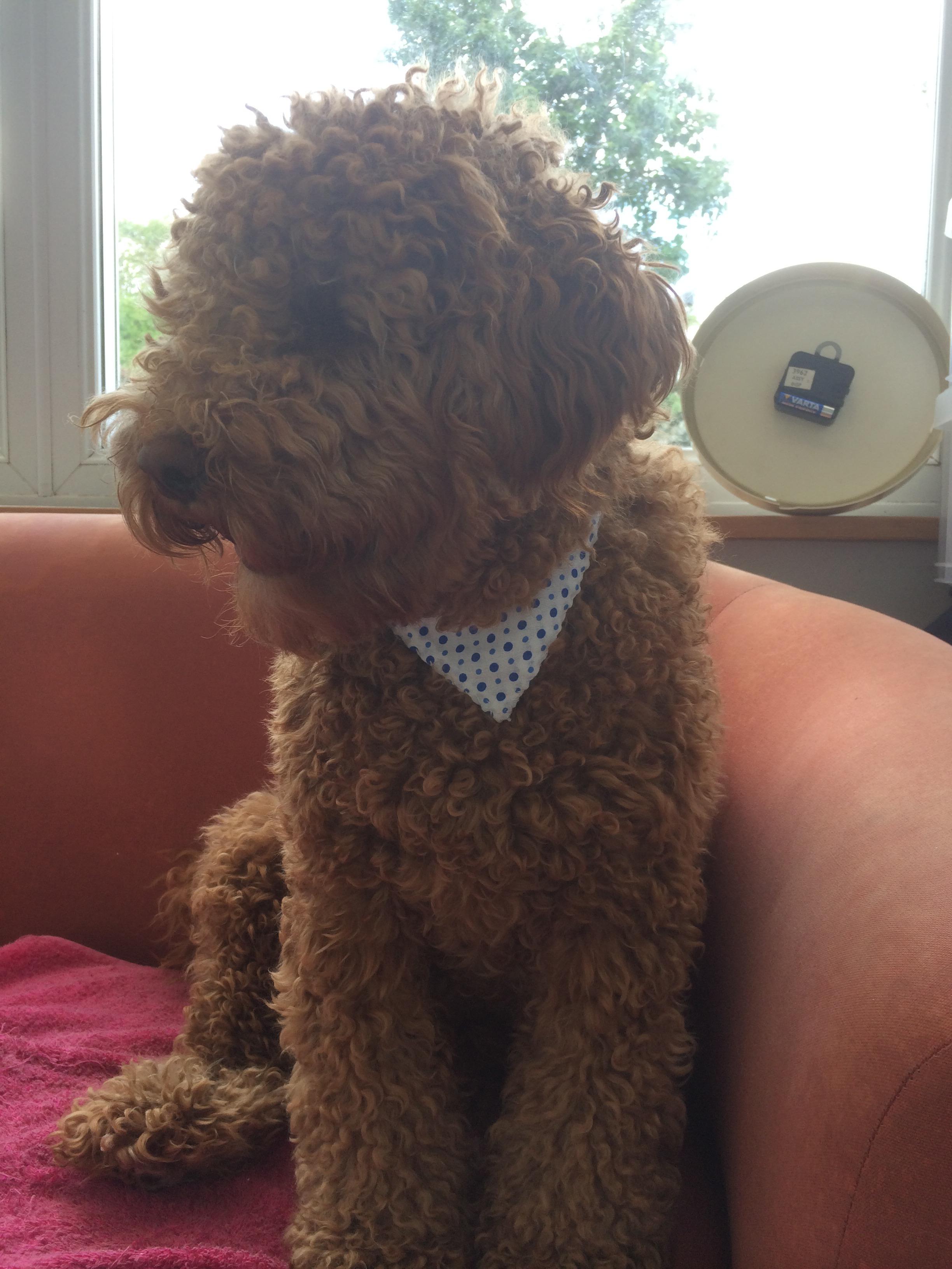 dog collar neckerchief