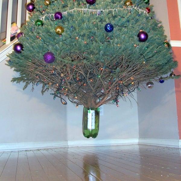 Anti-Gravity Tree Stand