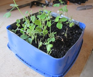 Ice Cream Tub Seedling Tray