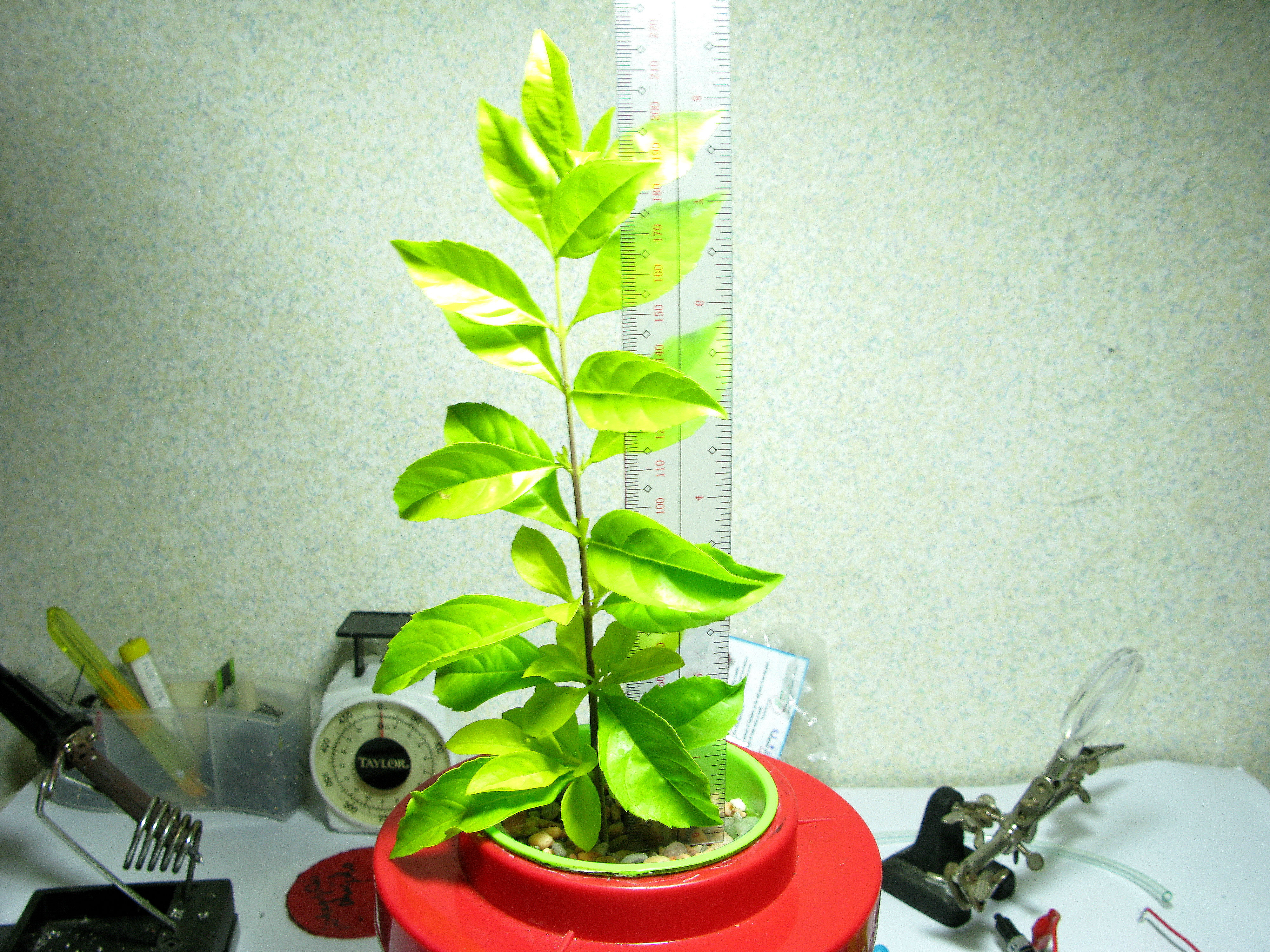 My First Hydroponic Plant (Beginner's Guide)