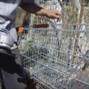 Drill Bit From Shopping Trolley