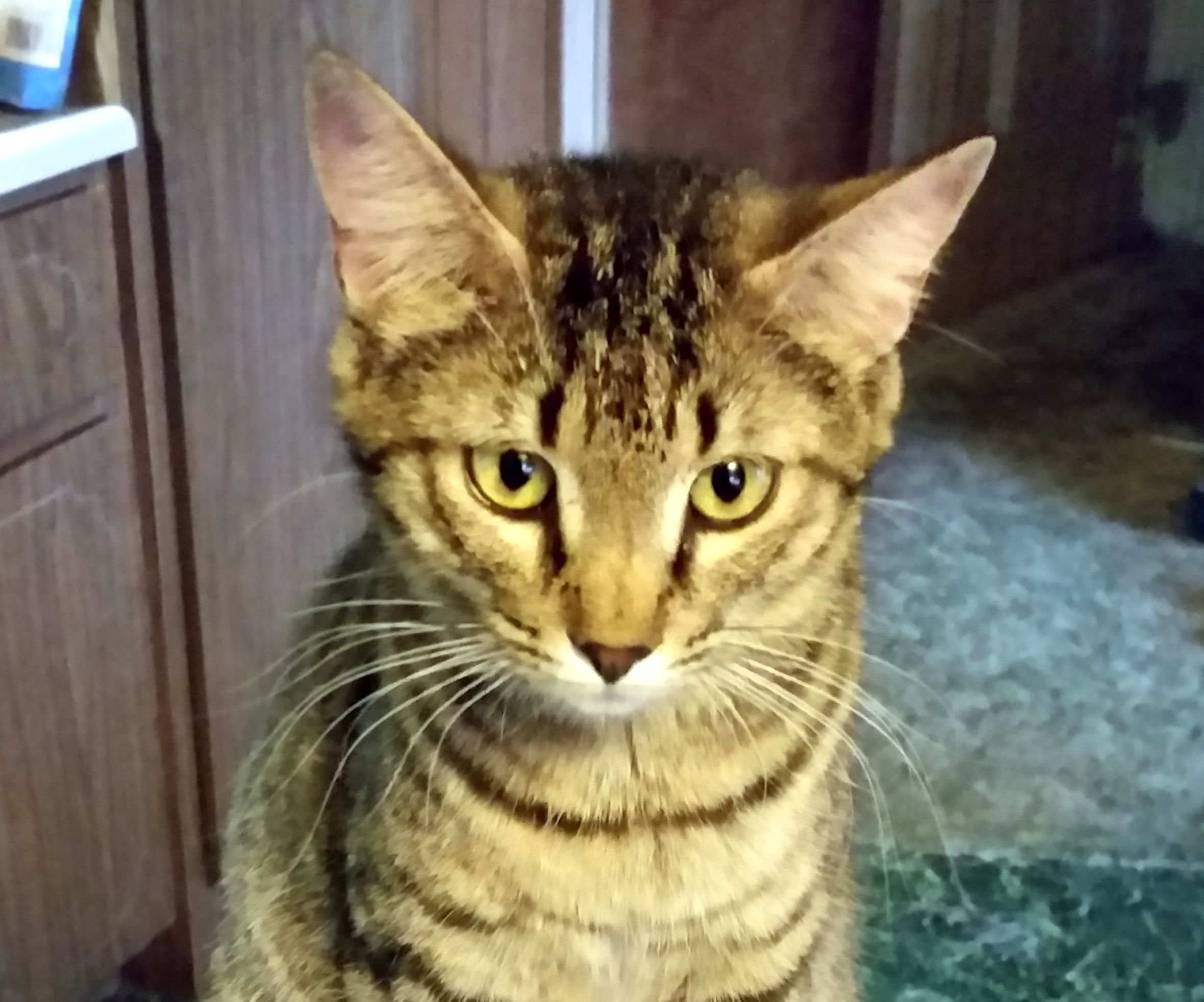Cat Discourager - Keep Cat Off Furniture