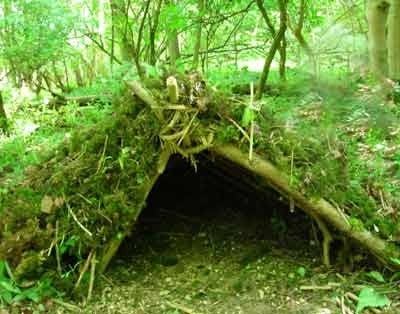 Make a Shelter in the Woods